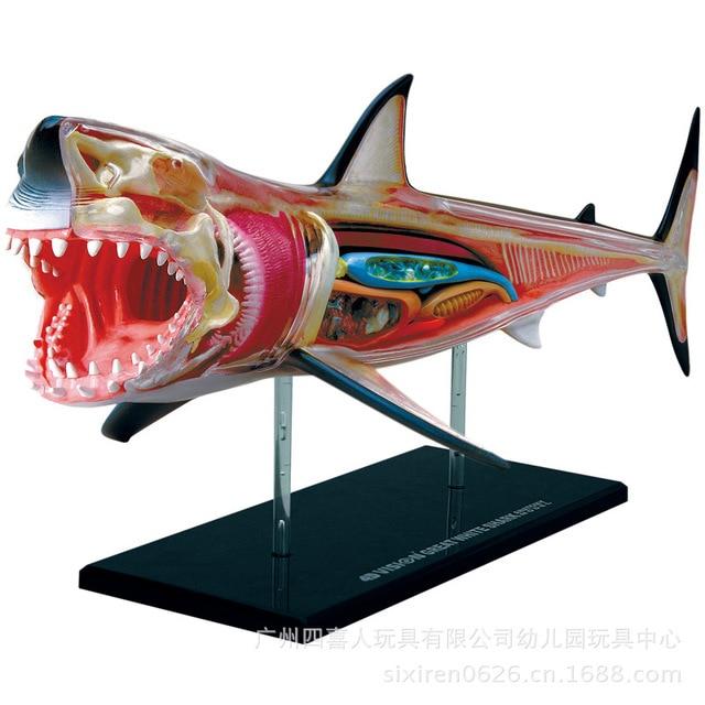Transparent 4D Puzzle Assembling Animal Model Shark Anatomy ...