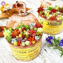 200pcs Mix Succulent Lithops Seeds Living Stone Ass Flower Seeds Bonsai Plants for Home Garden High germination rate 2018 HOT