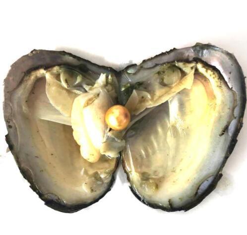 10 pcs/lot huîtres avec Edison perles rondes perles 9-12mm couleur arc-en-ciel perles deau douce bricolage cadeau bijoux sous vide-pack FP005