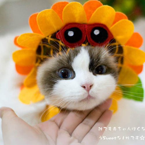 Popular Items Cute Dog Cats Hats Sunflower Pets Cosplay