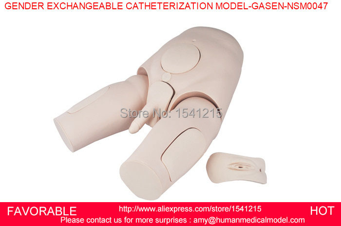 CATHETERIZATION MANIKIN MODEL,URINARY MODEL,MALE/FEMALE CATHETERIZATION,GENDER EXCHANGEABLE CATHETERIZATION MODEL-GASEN-NSM0047 transparent female catheterization simulator urinary catheterization model
