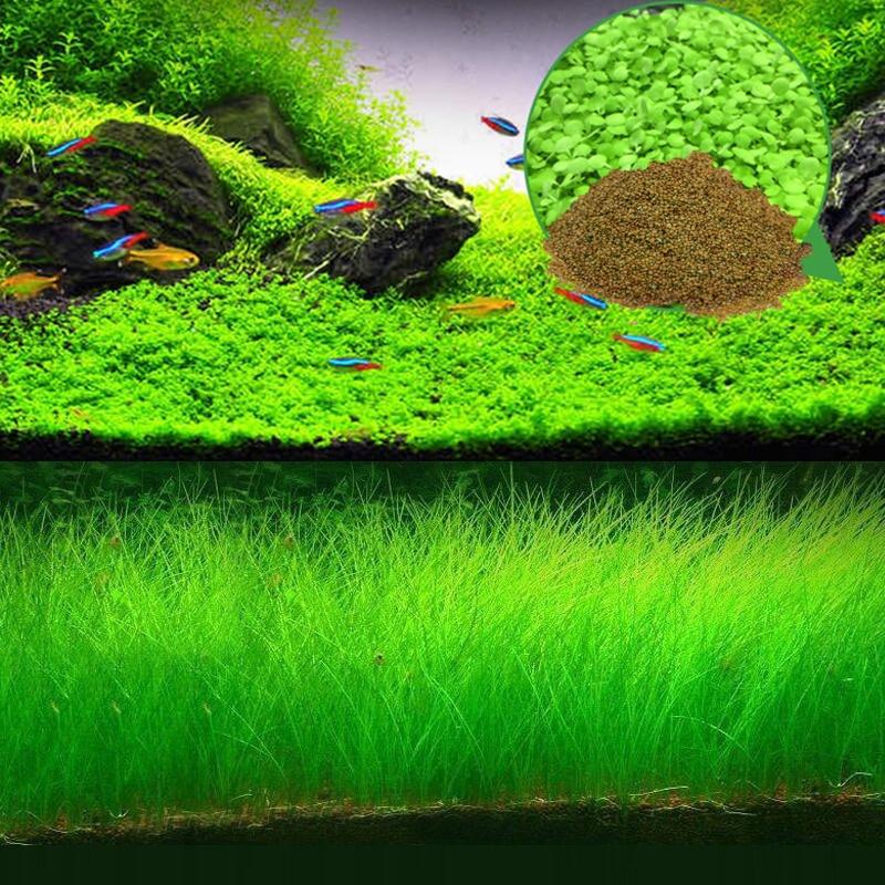 Easy Growing Aquarium Plant Seeds Decoration Water Grass