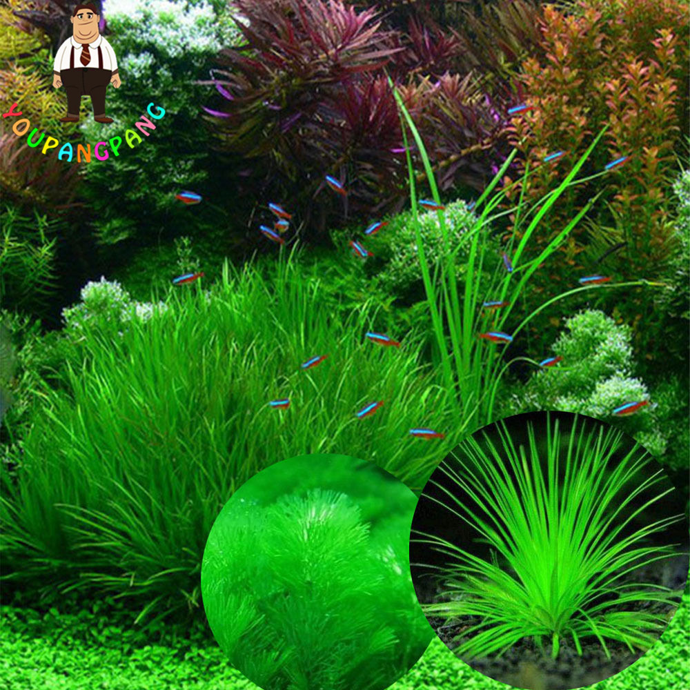 200 pcs live aquarium plants seeds grass mix water for Easy aquatic plants