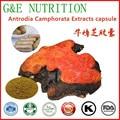 Medicina china mushroom extract powder camphorata Antrodia cápsula 100 unids