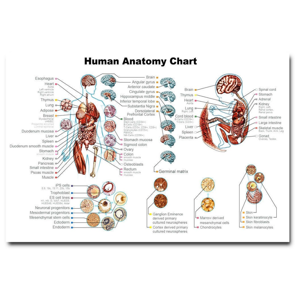 MQ120 Human Anatomy System Body Map Medical Science Hot New Art ...