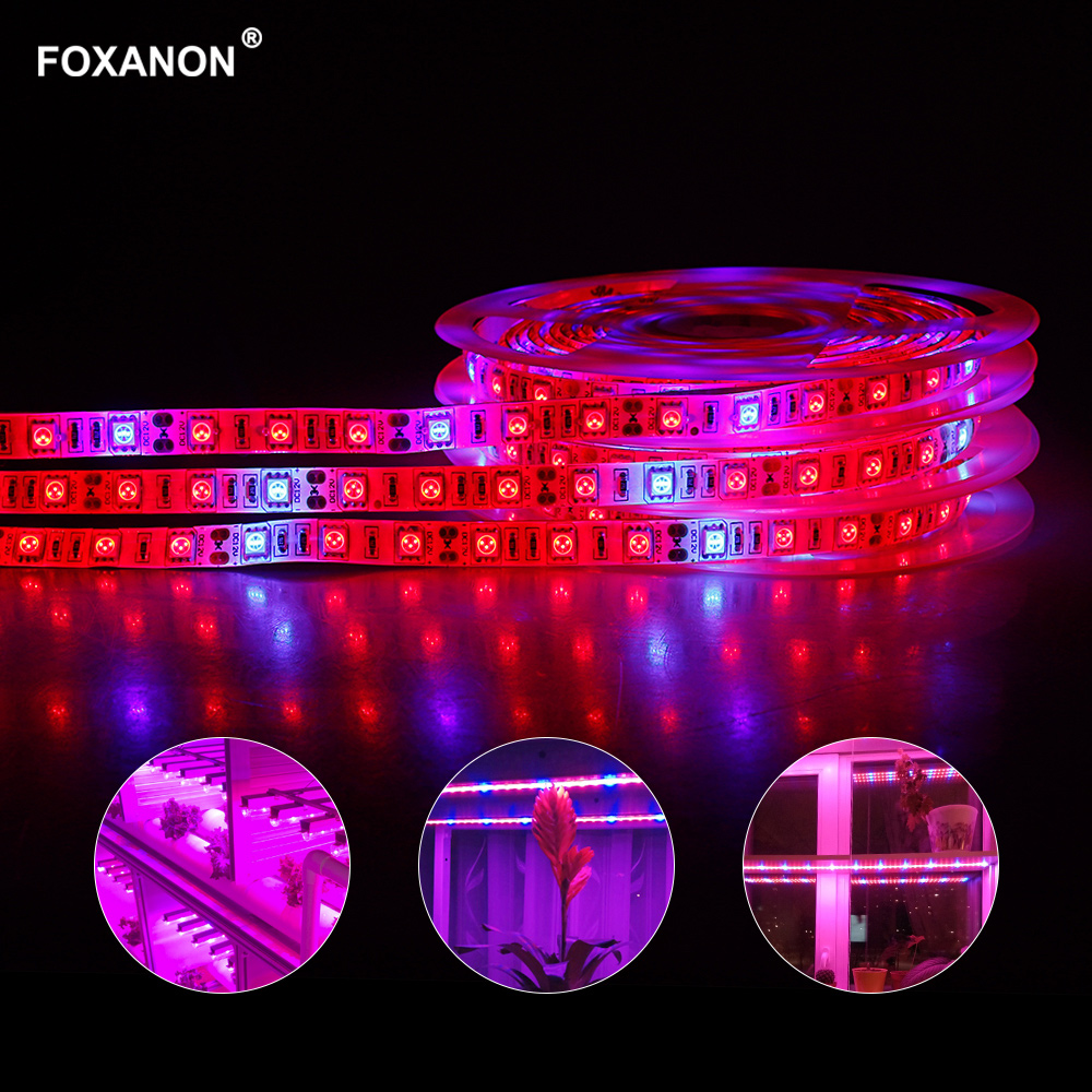 100% Quality Foxanon 5m Led Full Spectrum Grow Light Strip 60leds/m 300leds Phyto Lamps With Dc12v Power Fitolampy For Plants Seed Hydroponic