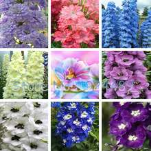 Rare 18 different colors of Rocket larkspur seed Consolida Ajacis Delphinium Flowers potted bonsai DIY home garden 50PCS