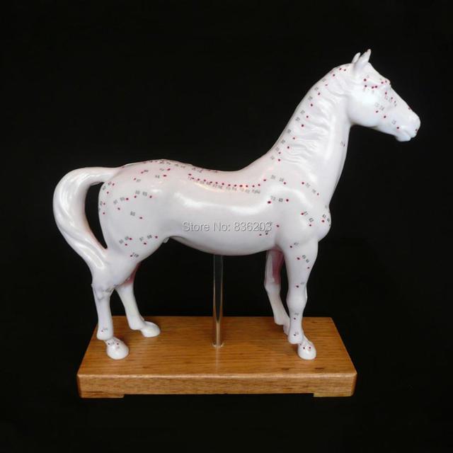 Veterinario caballo equino acupuntura modelo en trauma anatomía ...