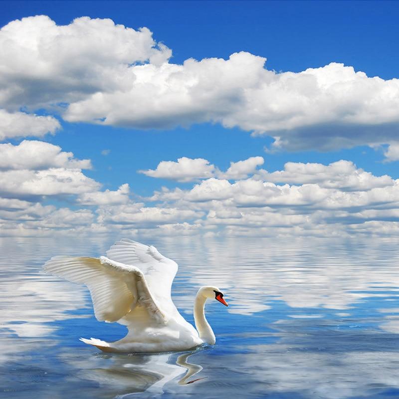 Kustom 3d Foto Wallpaper Hd Angsa Seagull Langit Biru Dan Awan Putih