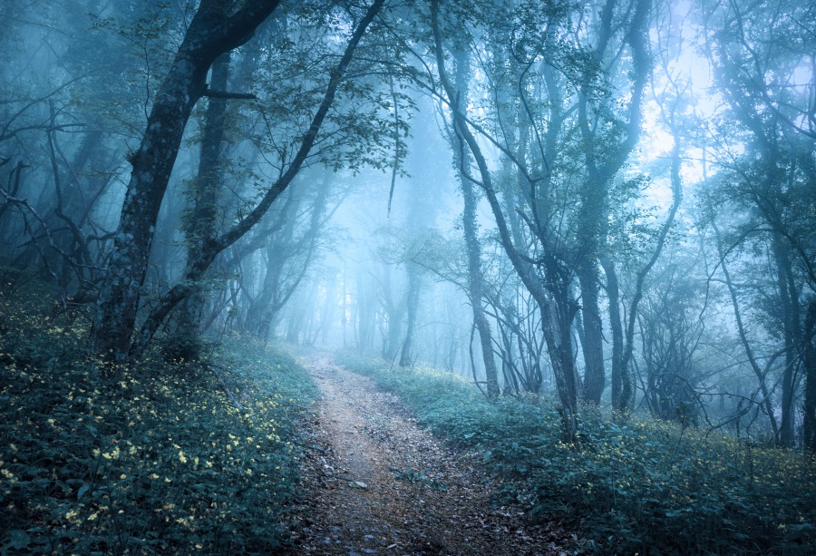 Laeacco Mysterious Hazy Forest Flowers Pathway Landscape