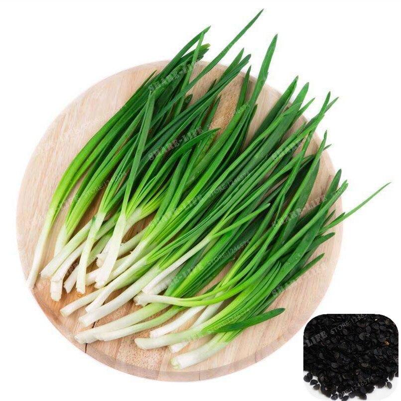 100Pcs Allium Fistulosum