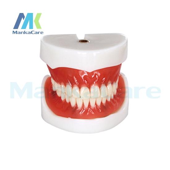 Manka Care - Full Denture Implant Mode Oral Model Teeth Tooth Model цена