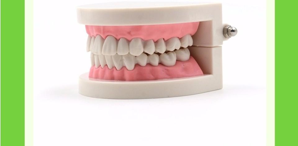 Teeth Model0000001