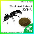 Top selling 100% pure natural Organic Polyrachis Black Ant extract 800g/lot free shipping