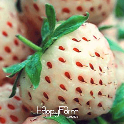 Loss Promotion!100 Seed/Lot White Fresh Strawberry Seeds Planting a Garden Courtyard Green Fruits Strawberry Seed,#K5Z1K1