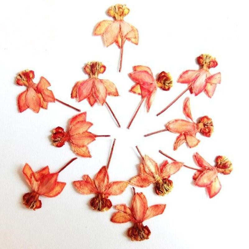 Denisfen Natural Dried Flowers Long Ear Uk Blue Lavender Bouquet Arrangements Diy Home Wedding Decoration Dfl1022