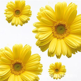 Removable 12 Pieces/a Lot 3D Creative Daisy Flowers Wall Stickers Home Decorations Diy Decals Living Room Mural Art Posters