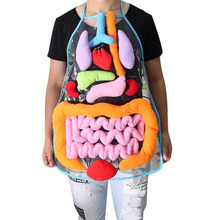 Anatomia fartuch ludzkie ciało organy świadomość przedszkole nauka strona główna szkoła nauczanie dzieci edukacyjne spostrzeżenia zabawki dla dzieci
