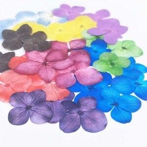 24 шт миниатюрные настоящие сухие прессованные цветы, сушеные лепестки цветов гортензии Eternelle, красивые наклейки для ногтей, украшения, цвет...
