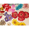 Natural Real Dried Dry Flowers Home Floral Crafts DIY Decoration Materials 043-072