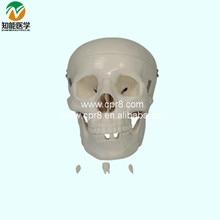 BIX-A1043  The Skull Model  G135