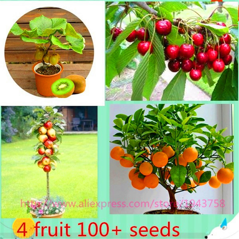 4 kind fruit ,bonsai fruit tree seeds,vegetable and fruit seeds total 100+seeds (apple,kiwi,orange,cherry seeds)