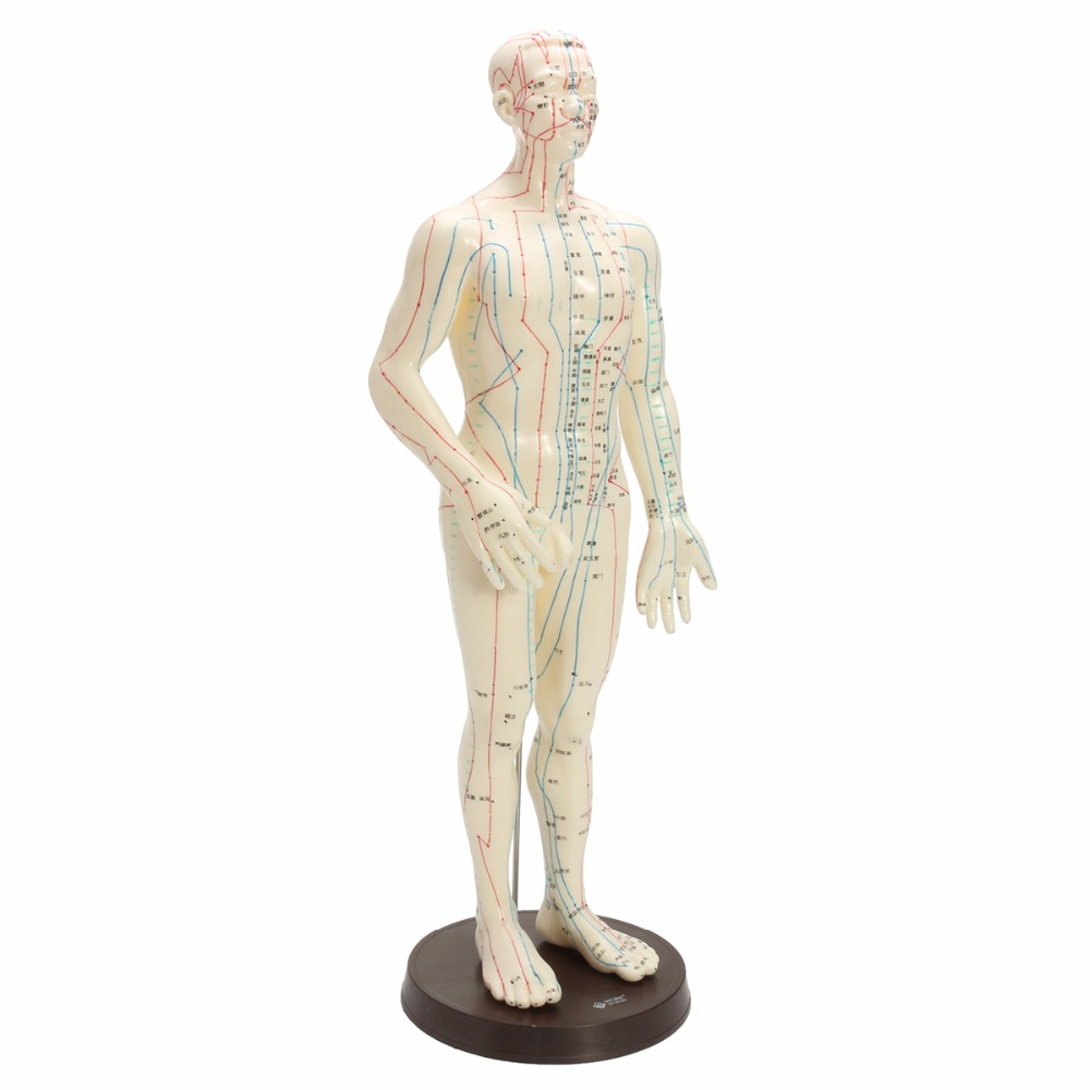 Human Body Acupuncture Model Male Meridians Model Chart Book Base 50cm male human acupuncture points