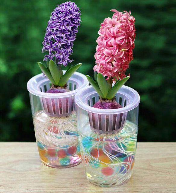 Plastic Hydroponic Vase Hyacinth Transparent Flower Pot Planting