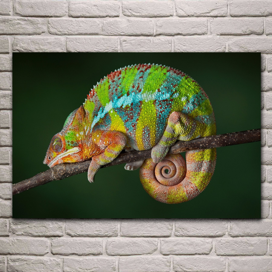Chameleon 7 Tone Paint: Animal Reptile Chameleon Color Changing Living Room