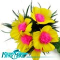 Milagro Flor de Plumas Envío Libre King Trucos de Magia Props Juguetes Correo Electrónico de Vídeo Para Usted