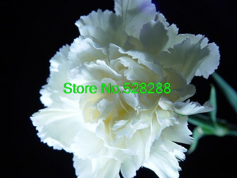 obtenir en ligne à bon marché blanc oeillets fleurs -aliexpress