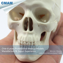 CMAM-SKULL08 Hand Size Mini 3 Parts Human Skull Model,  Medical Science Educational Teaching Anatomical Models