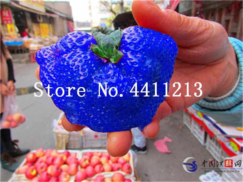 300 шт гигантские тайские земли большой клубничный бонсай супер большие и синие Клубничные фрукты, технология бонзаи семена для бонсая растения подарок для сада