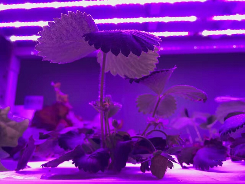 Grow Led (1)