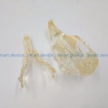 High Quality Rabbit Dentition Model teeth skull jam teaching model Transparent anatomical model of Veterinary Medicine
