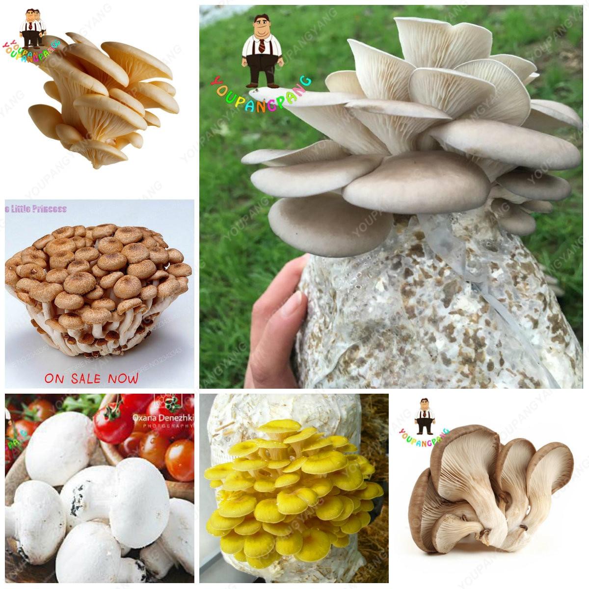 Hot Sale 100 Pcs A Variety Of Mixed Edible Mushrooms, Pleurotus Delicious Mushroom Strains Plants Bonsai Fruit Vegetables Garden