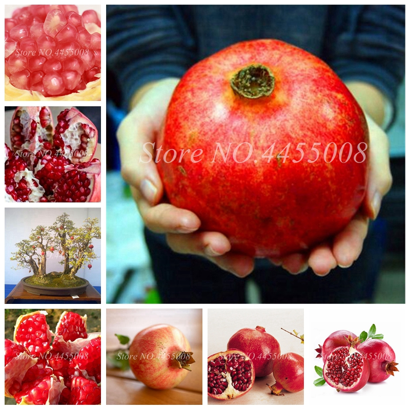 50pcs / Bag Red Pomegranate Fruit Home Plant Outdoor Delicious Fruta Tree Bonsai Very Big &Sweet For Home Garden Planting