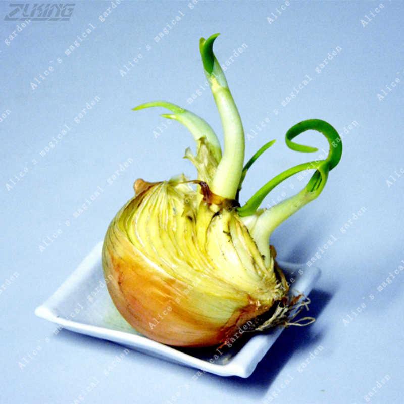 ZLKING 100 個黄色中国タマネギ盆栽新鮮なおいしい非 GMO インポート簡単野菜を栽培安い屋外植物鉢植え