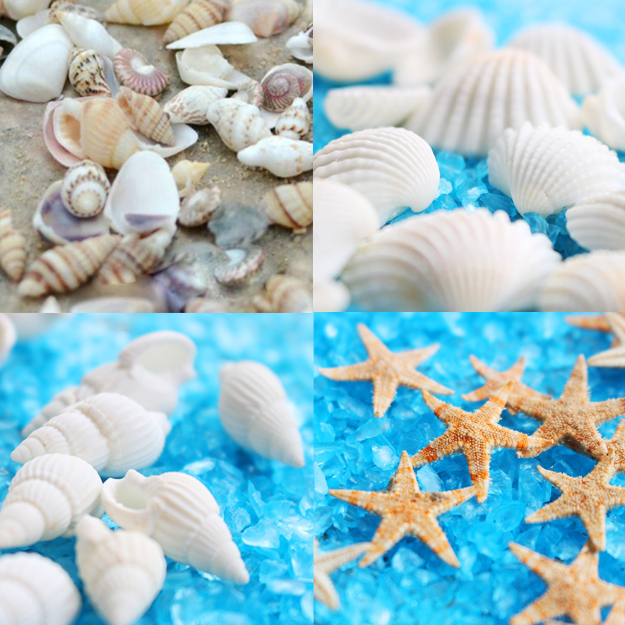 40piece mini 1cm starfish natural sea shell beads mixed size jewelry findings glass vial pendant glass globe filler globe shaped aluminum shell precise compass