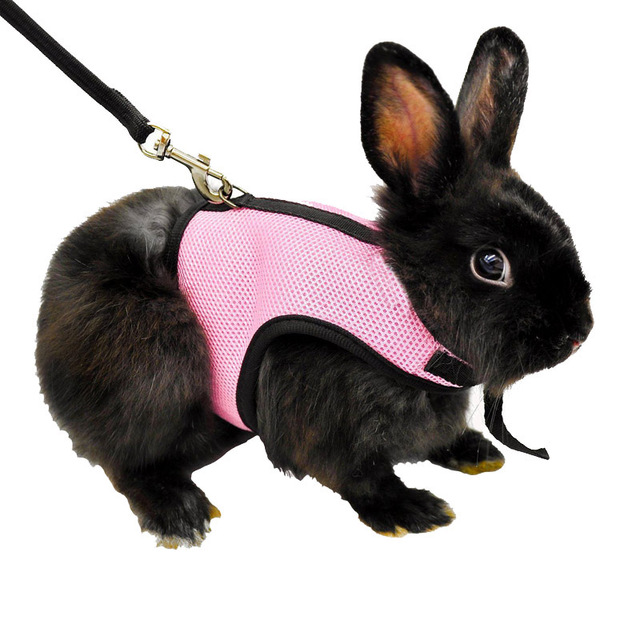 Harness with Leash for Rabbits