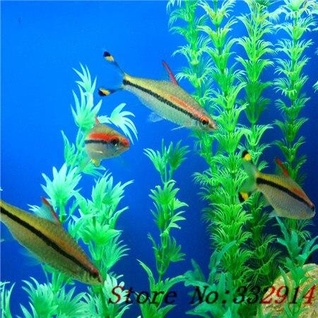 mezclado de plantas estanque de peces de acuario tanque de cultivo de