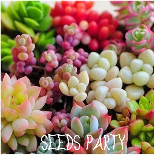 50pcs 22 Kinds Mix Succulent seeds Lithops Pseudotruncatella Bonsai plants Seeds for home & garden,#UM45X1
