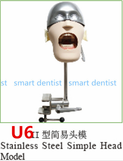 Good Quality Stainless steel simple head model Apply to the oral cavity simulation training fixed on the dental chair finger rock blue enchantress simulation flower assembly model 3d metal puzzle never fade red rose stainless steel jigsaw gift