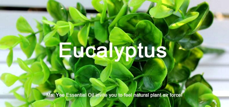 Eucalyptus oil- Highest Plant Organic Certified Eucalyptus Essential Oils 100% Pure & Natural Undiluted Therapeutic Grade 10ml 2