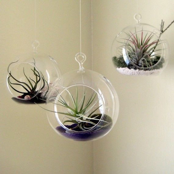 3pcsset Hanging Glass Air Plant Plantersopening 2 Side Holes In
