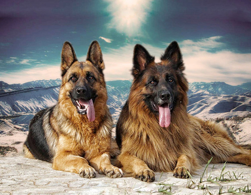 ,Adults Handmade Needlework Embroidery Set for Wall Decor 22/×21Cm cici store DIY Counted Cross Stitch Kits-German Shepherd