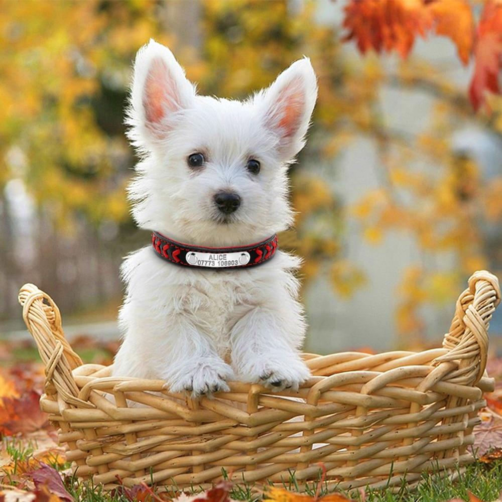 collier de chien avec plaque signalétique