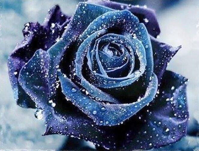 achetez en gros bleu rose photos en ligne à des grossistes bleu