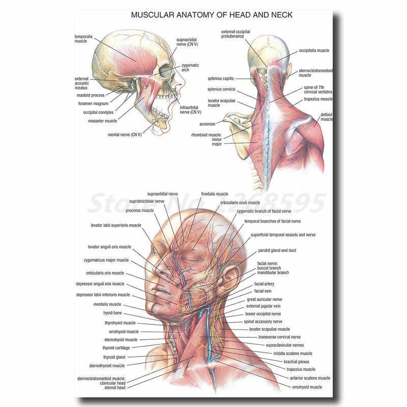 Insan Anatomisi Bas Ve Boyun Duvar Sanati Tuval Posterler Baskilar