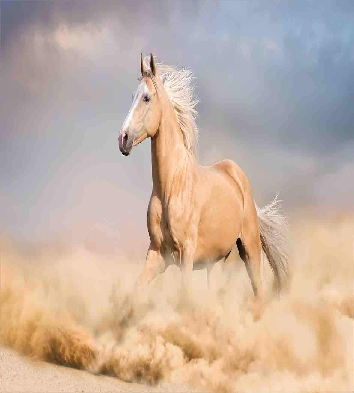 Duvet Cover Set Palomino Horse In Sand Desert With Long Blond Male Hair Power Wild Animal Theme 4 Piece Bedding Set Bedding Sets Aliexpress